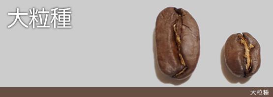 マラゴジーベ種